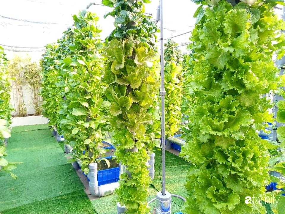 Khu vườn thẳng đứng xanh mướt rau sạch trên nóc chung cư ở TP. HCM - Ảnh 3.