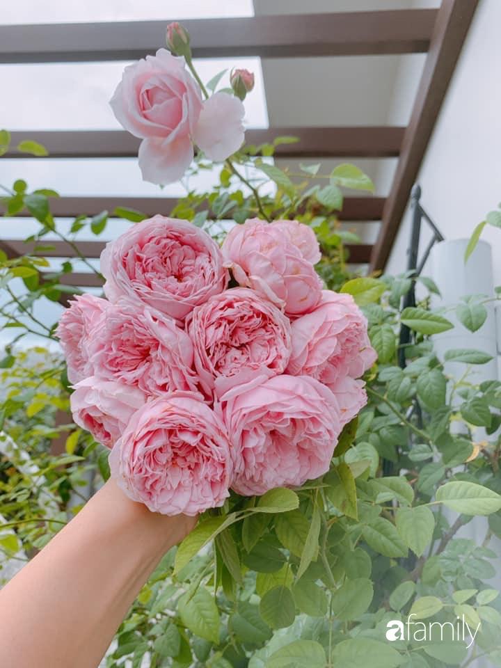 """""""Gia tài"""" rực rỡ với đủ loại hồng khoe sắc trên sân thượng 180m2 của nữ Giảng viên xinh đẹp ở TP. HCM - Ảnh 7."""
