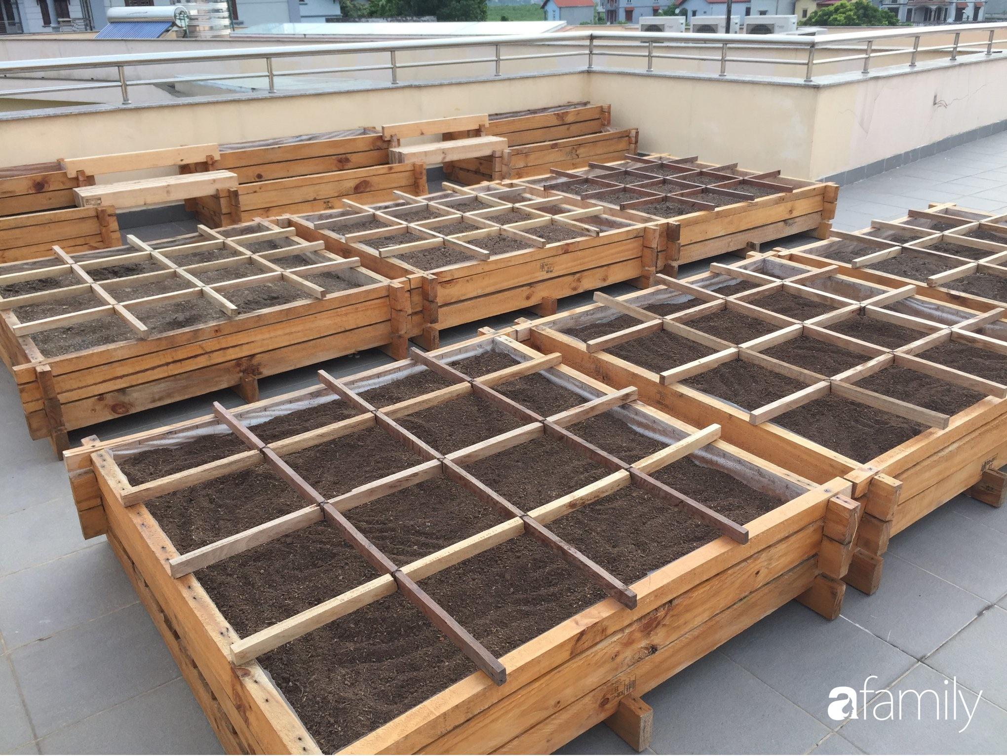 Học hỏi kinh nghiệm làm đất trồng rau từ chuyên gia tại Hà Nội, đảm bảo chị em nhà phố thoải mái rau sạch cho cả gia đình - Ảnh 4.