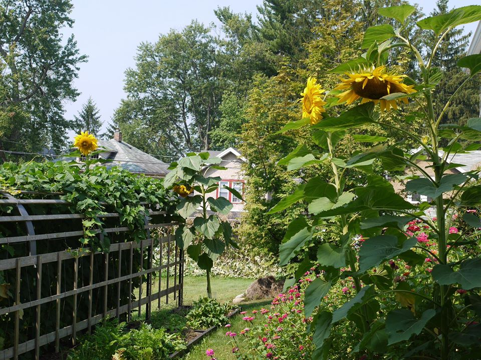 Khu vườn đủ loại rau quả đẹp như tranh của người phụ nữ trồng trọt từ năm 16 tuổi đến 63 tuổi - Ảnh 1.