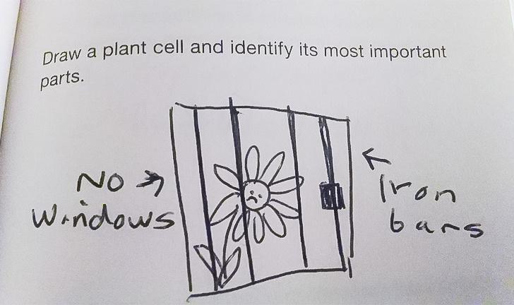 Cười bò với loạt câu trả lời khó đỡ trong bài kiểm tra của học sinh, có câu vô lý đến mức giáo viên đành ôm đầu bất lực - Ảnh 10.