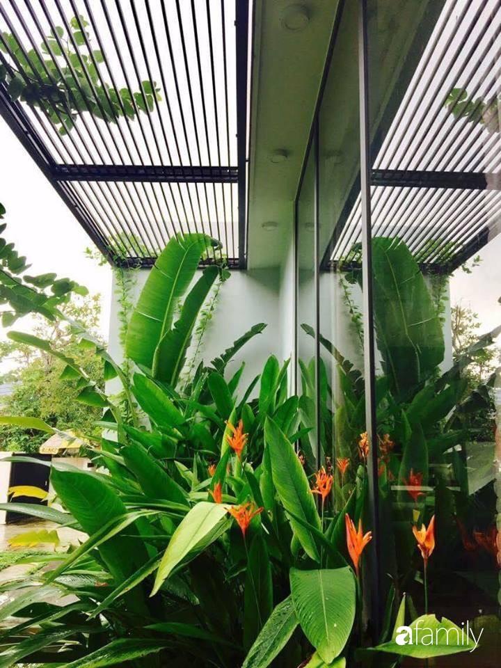 Chàng sinh viên kiến trúc tự decor vườn 200m² với cây xanh và ao cá cho gia đình 4 thế hệ ở ngoại ô Đà Nẵng - Ảnh 10.