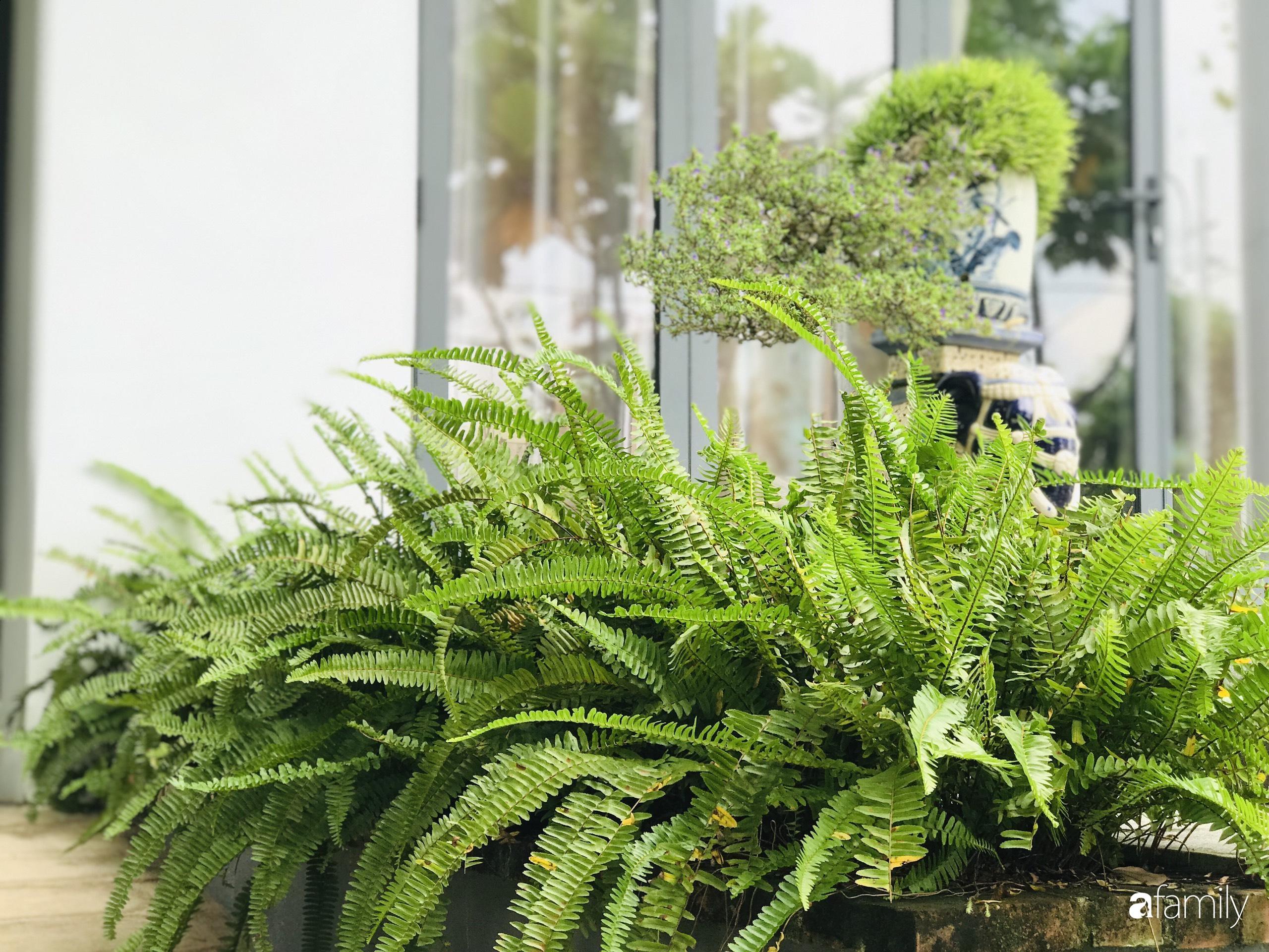 Chàng sinh viên kiến trúc tự decor vườn 200m² với cây xanh và ao cá cho gia đình 4 thế hệ ở ngoại ô Đà Nẵng - Ảnh 5.