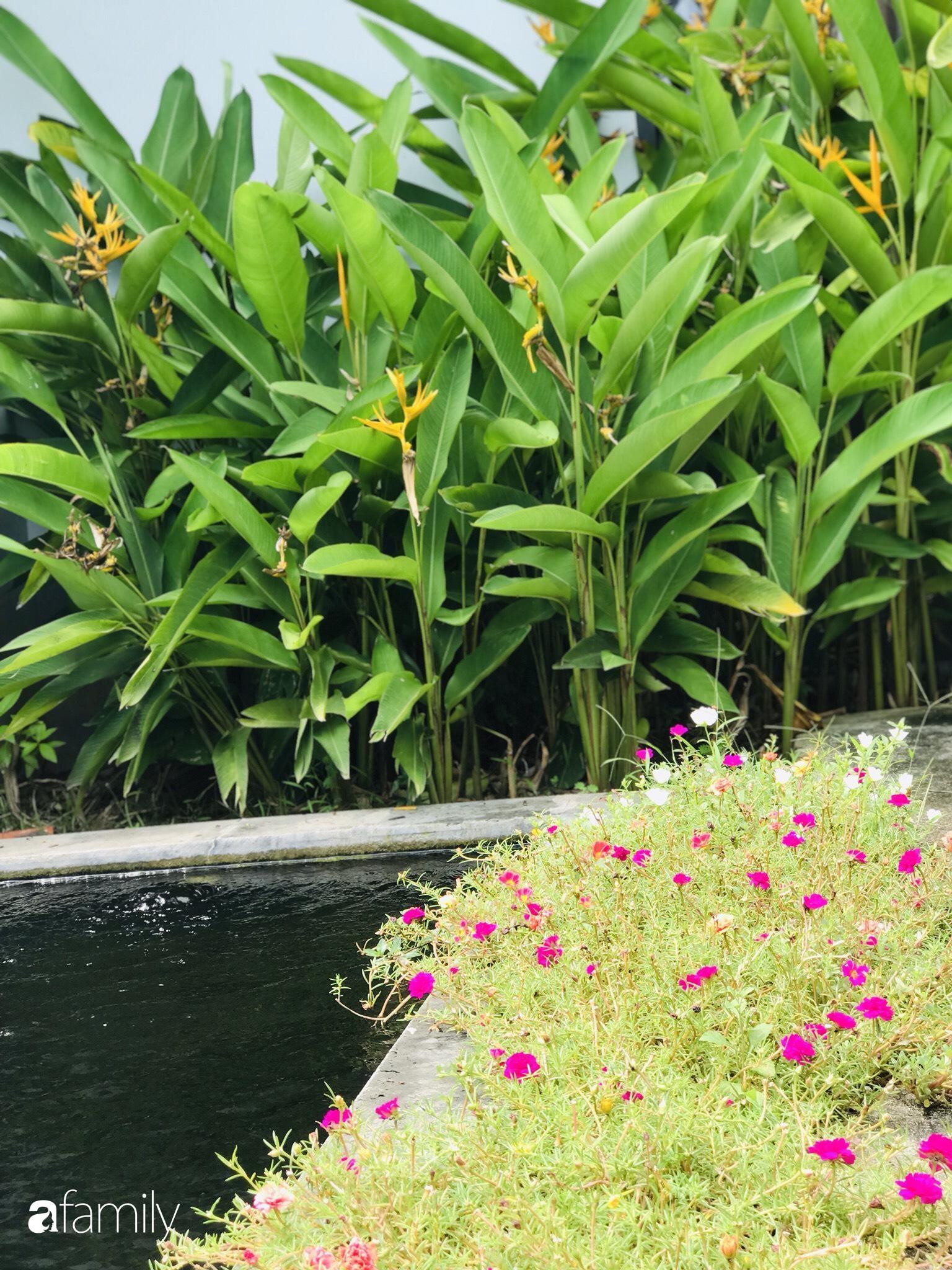 Chàng sinh viên kiến trúc tự decor vườn 200m² với cây xanh và ao cá cho gia đình 4 thế hệ ở ngoại ô Đà Nẵng - Ảnh 13.