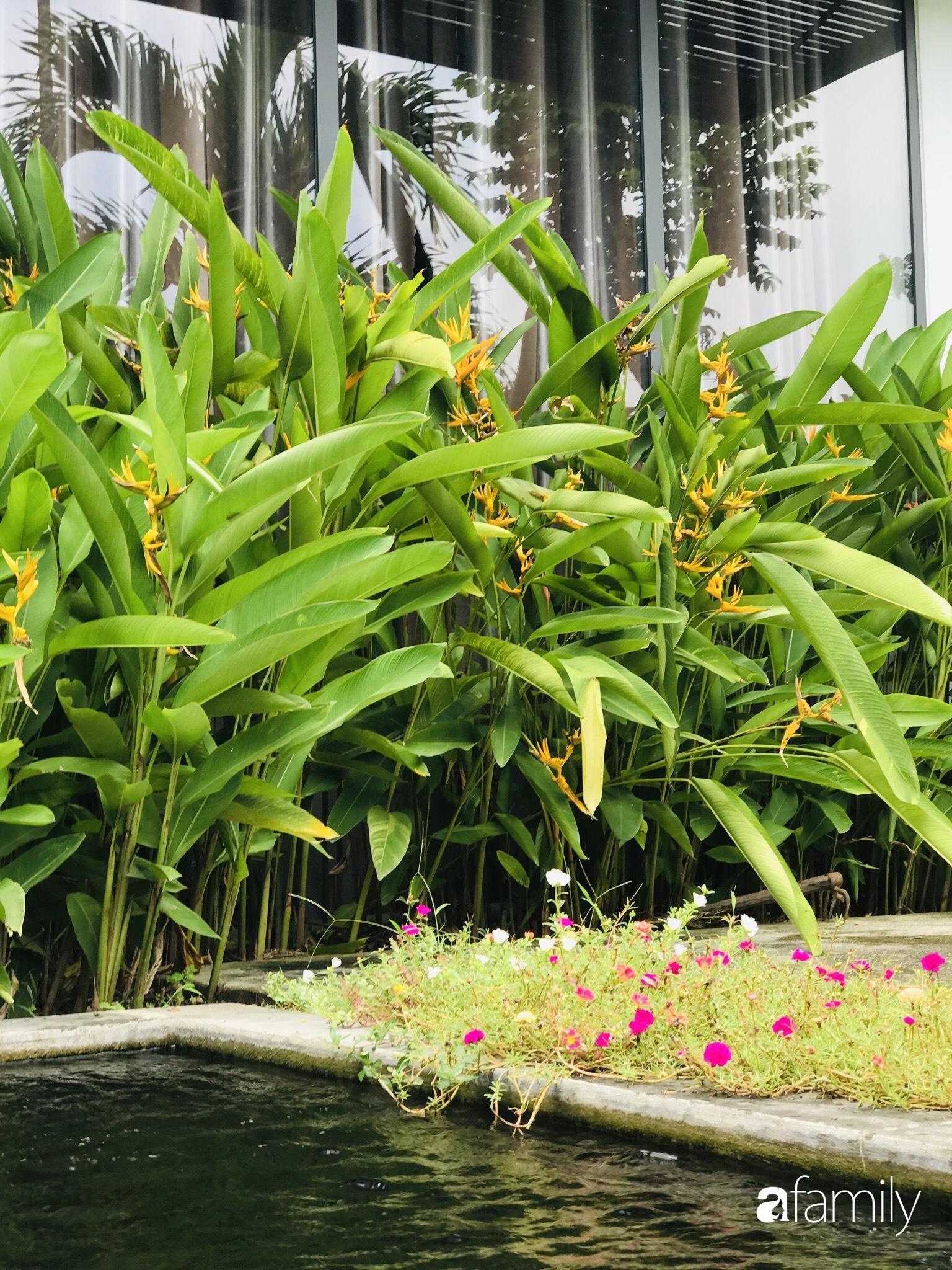 Chàng sinh viên kiến trúc tự decor vườn 200m² với cây xanh và ao cá cho gia đình 4 thế hệ ở ngoại ô Đà Nẵng - Ảnh 9.