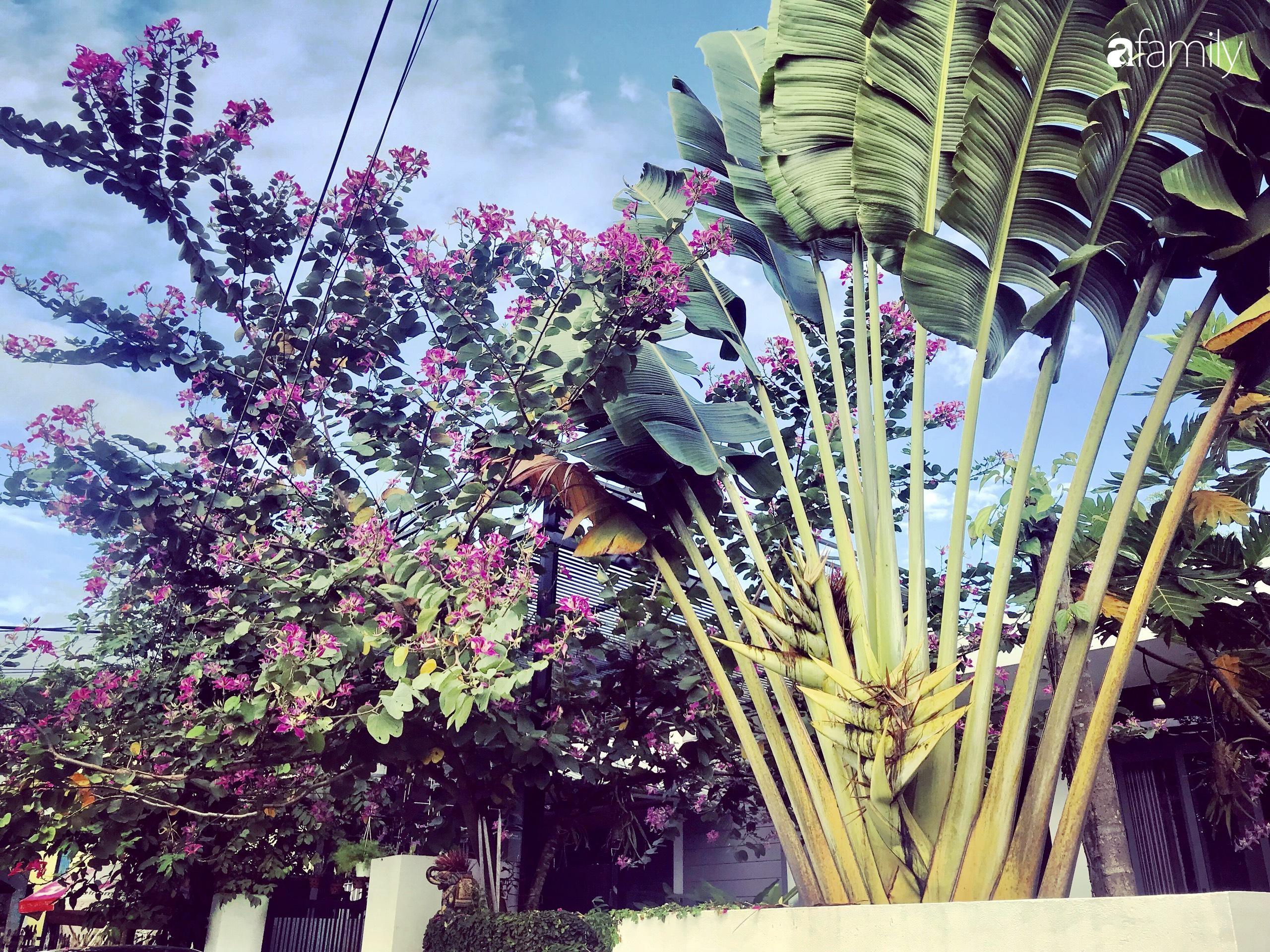 Chàng sinh viên kiến trúc tự decor vườn 200m² với cây xanh và ao cá cho gia đình 4 thế hệ ở ngoại ô Đà Nẵng - Ảnh 3.