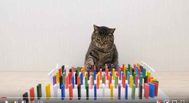 """Video """"hoàng thượng chơi Domino"""" hấp dẫn triệu người xem, cách giết thời gian hoàn hảo mùa cách ly Covid-19 - Ảnh 1."""