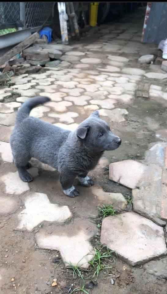 """Dân mạng ngỡ ngàng phát hiện chú chó Dúi idol có em sinh đôi, thần thái giống hệt Dúi chỉ khác mỗi màu lông và mắt không bị """"lé"""" - Ảnh 2."""