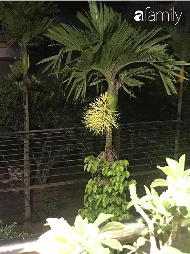 Bỏ nhà phố, cặp vợ chồng trẻ an nhiên với ngôi nhà bên vườn cây, ao cá tại Gia Lâm, Hà Nội - Ảnh 10.
