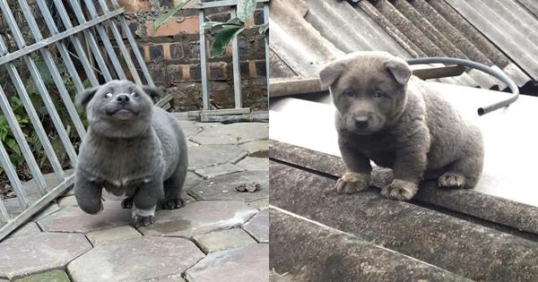Lộ diện mẹ đẻ của chú chó Nguyễn Văn Dúi khiến dân mạng thắc mắc sao mẹ chân dài như hoa hậu mà con trai thì... vừa lé vừa lùn - Ảnh 4.