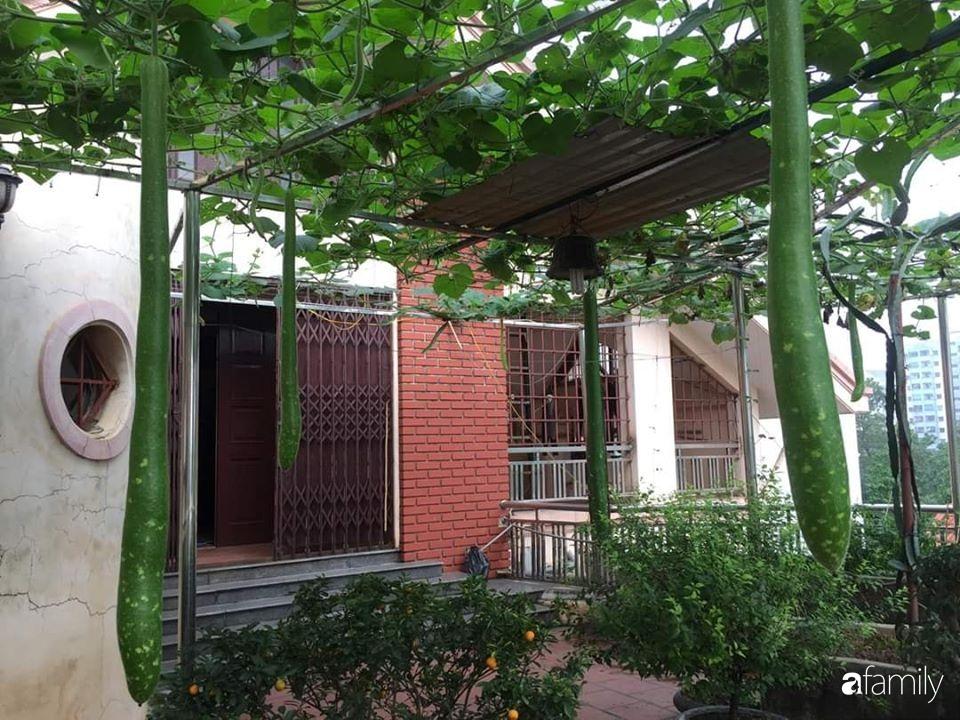 Mẹ đảm mát tay trồng đủ loại cây trái tốt tươi trên sân thượng 100m2 ở Hà Nội - Ảnh 1.