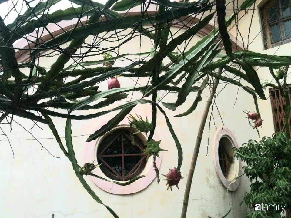 Mẹ đảm mát tay trồng đủ loại cây trái tốt tươi trên sân thượng 100m2 ở Hà Nội - Ảnh 12.