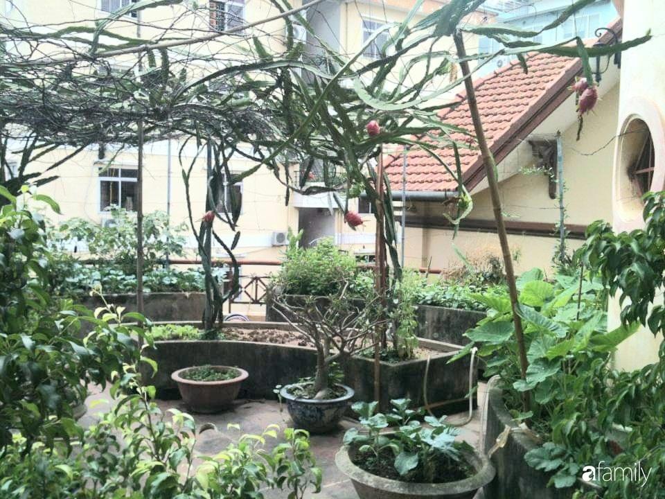 Mẹ đảm mát tay trồng đủ loại cây trái tốt tươi trên sân thượng 100m2 ở Hà Nội - Ảnh 10.