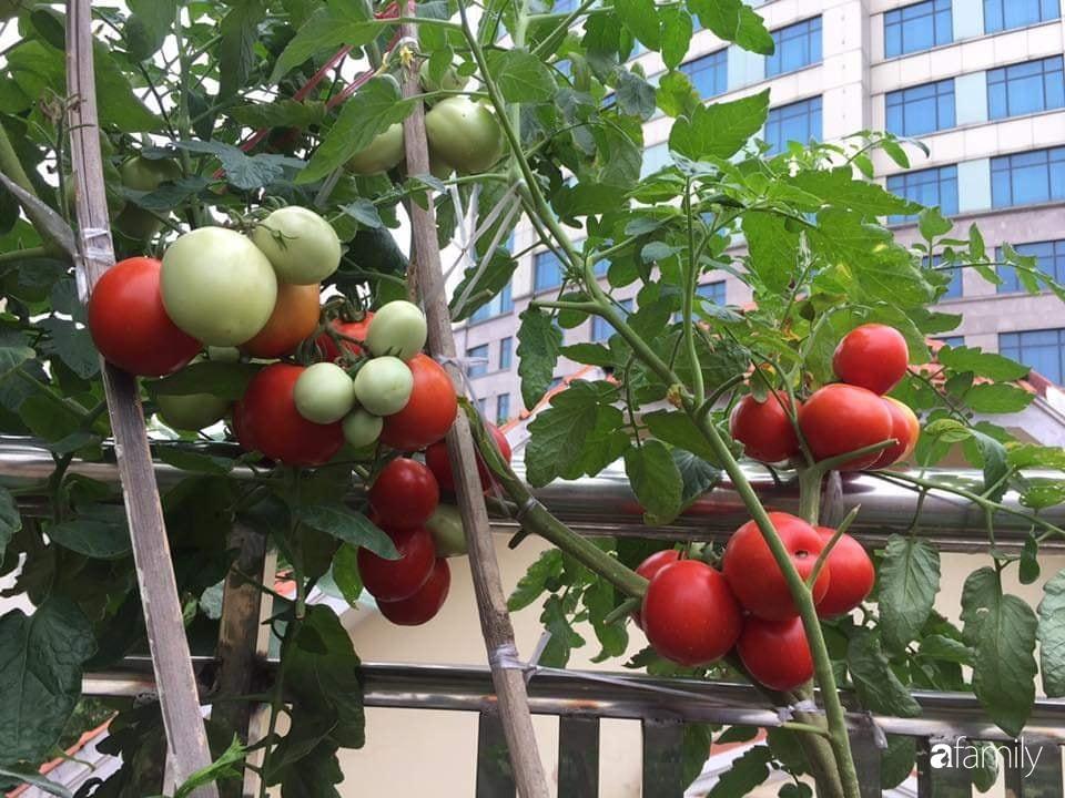 Mẹ đảm mát tay trồng đủ loại cây trái tốt tươi trên sân thượng 100m2 ở Hà Nội - Ảnh 4.