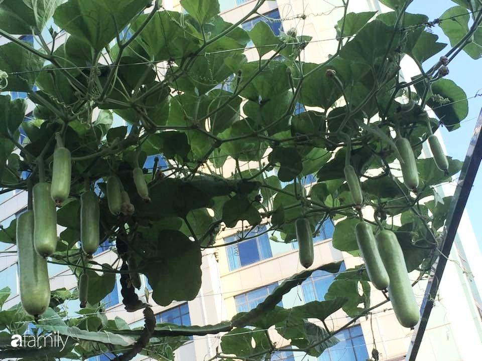 Mẹ đảm mát tay trồng đủ loại cây trái tốt tươi trên sân thượng 100m2 ở Hà Nội - Ảnh 8.