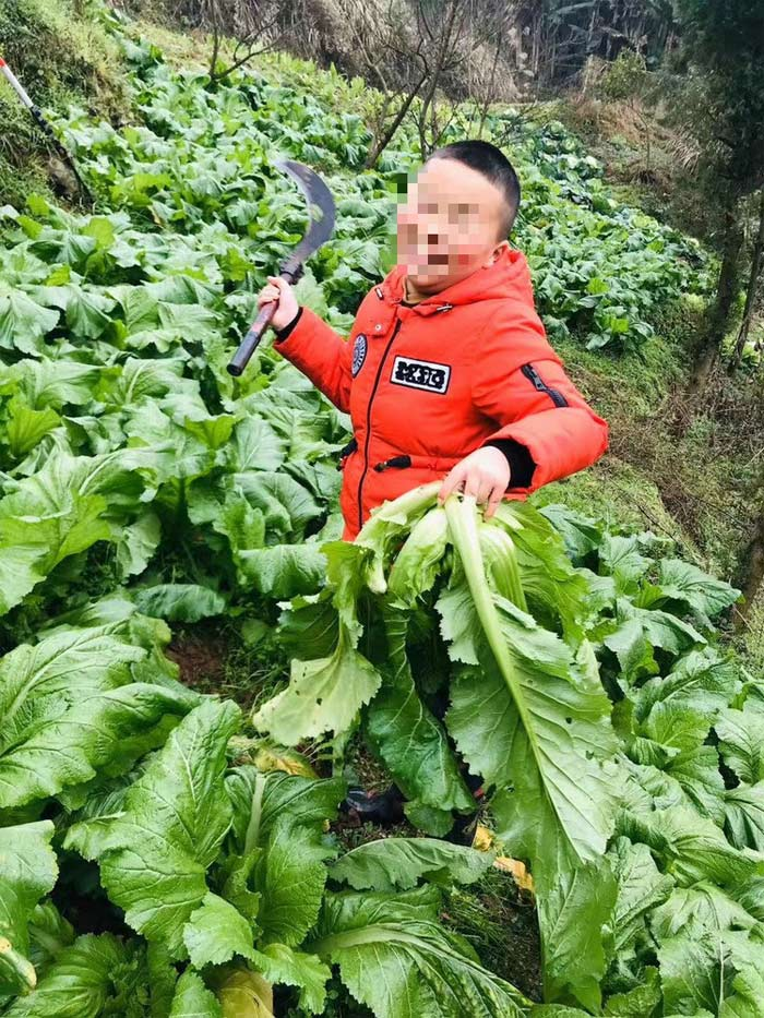 Cậu bé 8 tuổi được bố dạy làm vườn và nấu ăn thành thục trong kỳ nghỉ học vì Covid-19 - Ảnh 1.