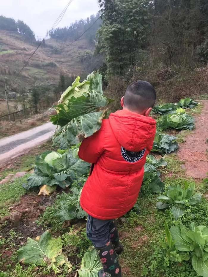Cậu bé 8 tuổi được bố dạy làm vườn và nấu ăn thành thục trong kỳ nghỉ học vì Covid-19 - Ảnh 3.
