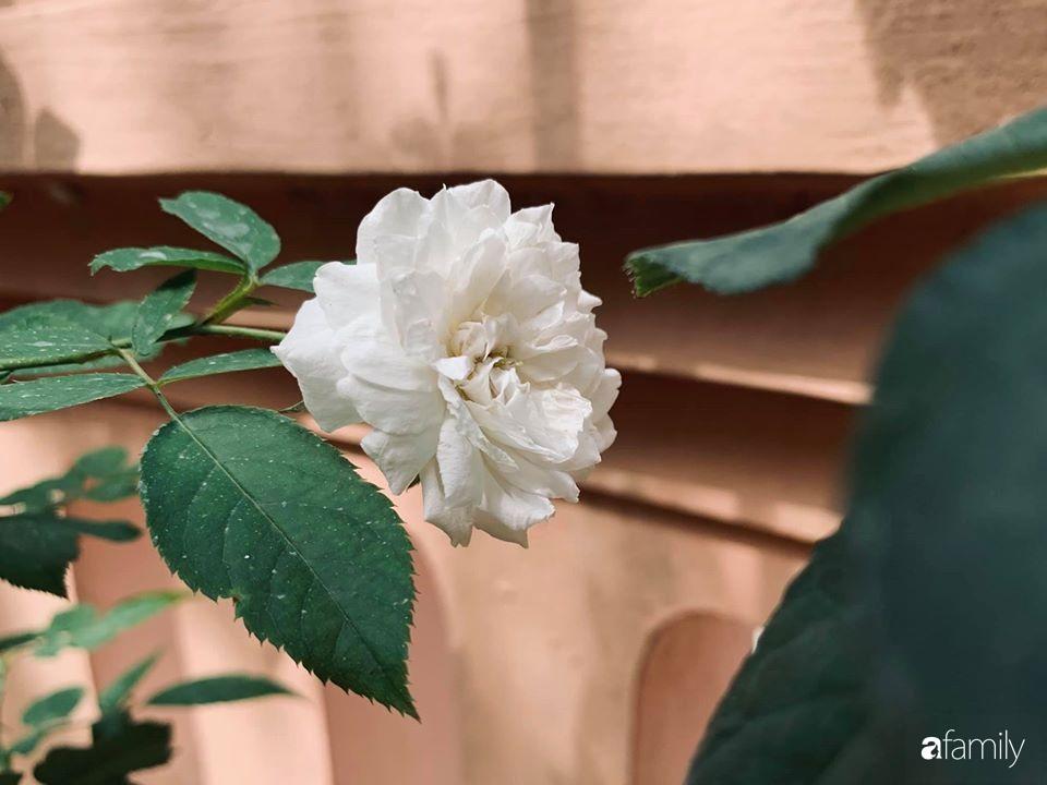 Ngôi nhà cấp 4 gần trăm năm tuổi bên cạnh khu vườn hoa hồng gói gọn những lặng lẽ, yên bình của xứ Huế mộng mơ - Ảnh 21.