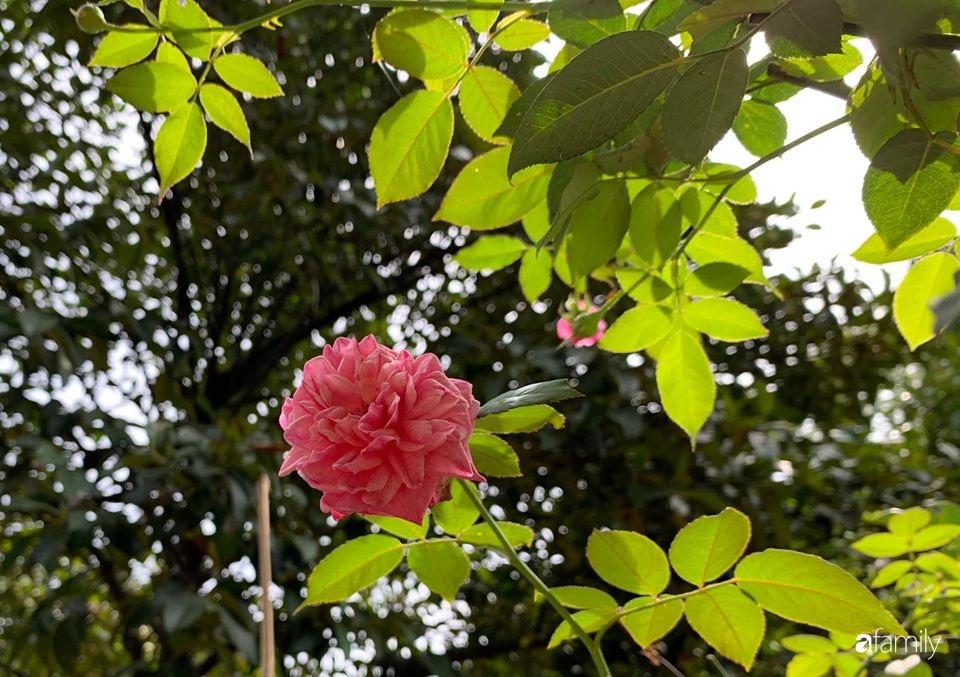 Ngôi nhà cấp 4 gần trăm năm tuổi bên cạnh khu vườn hoa hồng gói gọn những lặng lẽ, yên bình của xứ Huế mộng mơ - Ảnh 19.