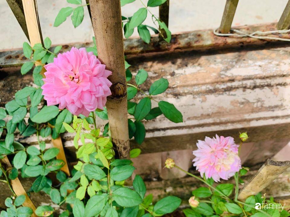 Ngôi nhà cấp 4 gần trăm năm tuổi bên cạnh khu vườn hoa hồng gói gọn những lặng lẽ, yên bình của xứ Huế mộng mơ - Ảnh 20.