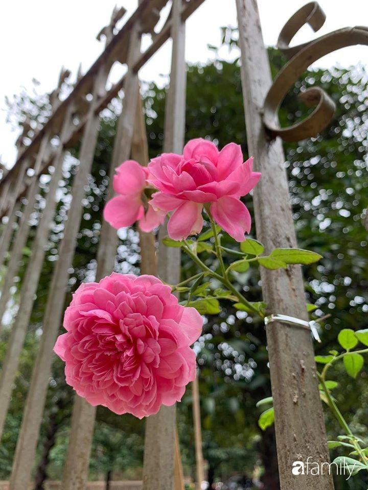 Ngôi nhà cấp 4 gần trăm năm tuổi bên cạnh khu vườn hoa hồng gói gọn những lặng lẽ, yên bình của xứ Huế mộng mơ - Ảnh 23.