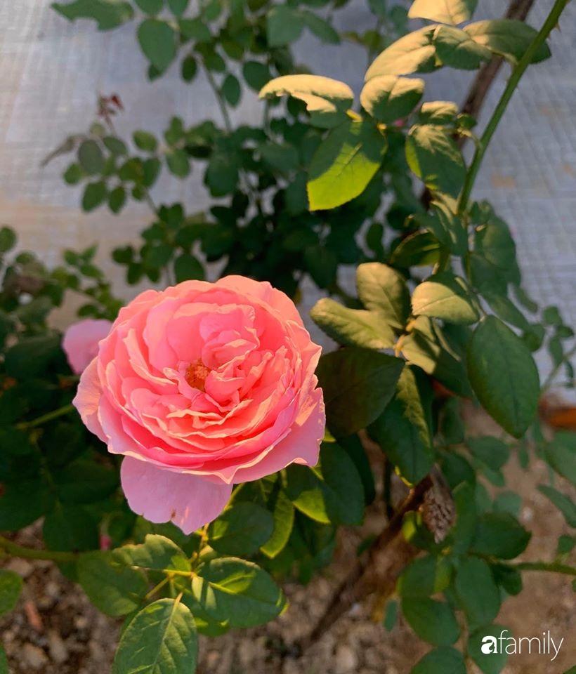Ngôi nhà cấp 4 gần trăm năm tuổi bên cạnh khu vườn hoa hồng gói gọn những lặng lẽ, yên bình của xứ Huế mộng mơ - Ảnh 22.