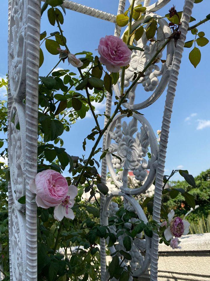 Biệt thự màu trắng siêu sang trồng nhiều hoa và cây xanh của Hoa hậu đền Hùng Giáng My - Ảnh 11.