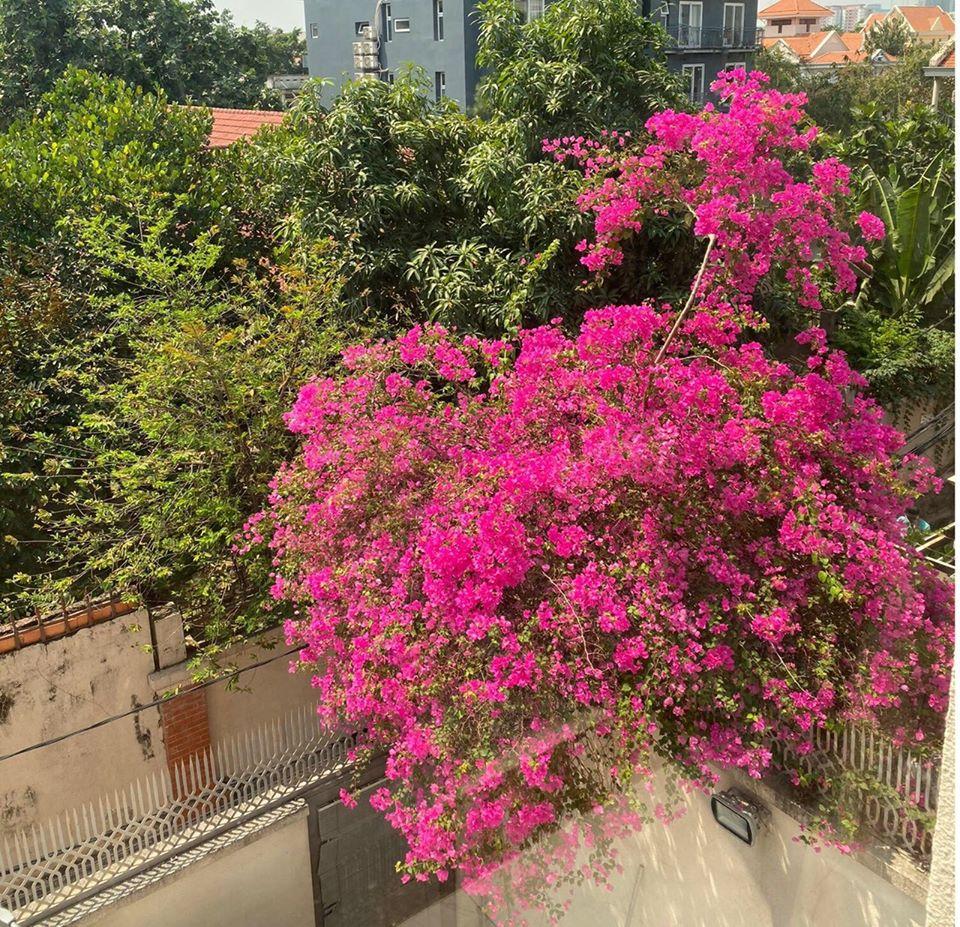 Biệt thự màu trắng siêu sang trồng nhiều hoa và cây xanh của Hoa hậu đền Hùng Giáng My - Ảnh 10.