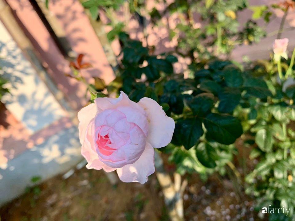 Ngôi nhà cấp 4 gần trăm năm tuổi bên cạnh khu vườn hoa hồng gói gọn những lặng lẽ, yên bình của xứ Huế mộng mơ - Ảnh 16.