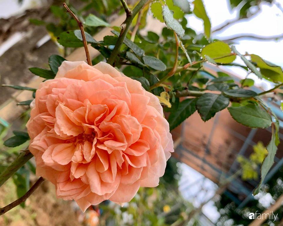 Ngôi nhà cấp 4 gần trăm năm tuổi bên cạnh khu vườn hoa hồng gói gọn những lặng lẽ, yên bình của xứ Huế mộng mơ - Ảnh 17.