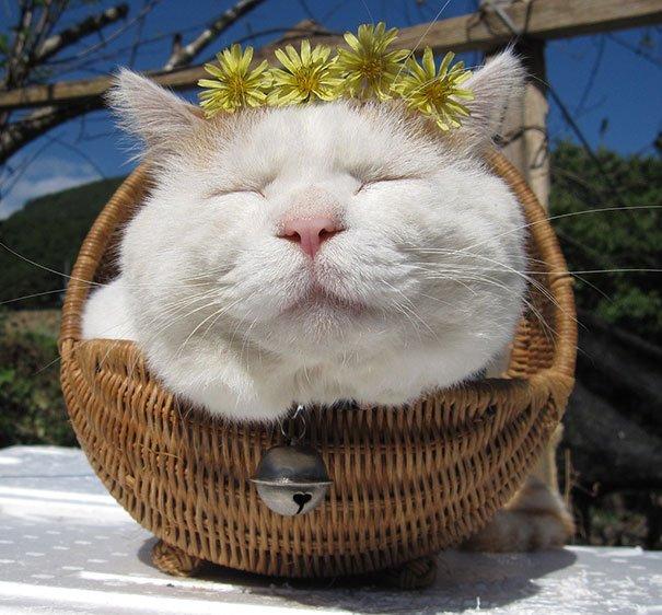 Shironeko - Chú mèo thích ngủ nổi tiếng nhất Nhật Bản đã mất - Ảnh 4.