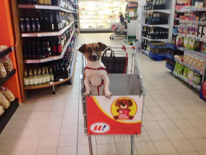 19 siêu thị được đánh giá cao nhờ cách bán hàng thông minh và có phần hóm hỉnh - Ảnh 31.
