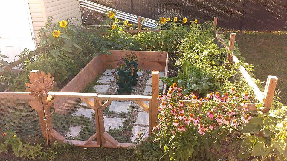 Cô gái truyền cảm hứng yêu thích làm vườn nhờ trồng cây gì cũng xanh mướt tốt tươi - Ảnh 3.