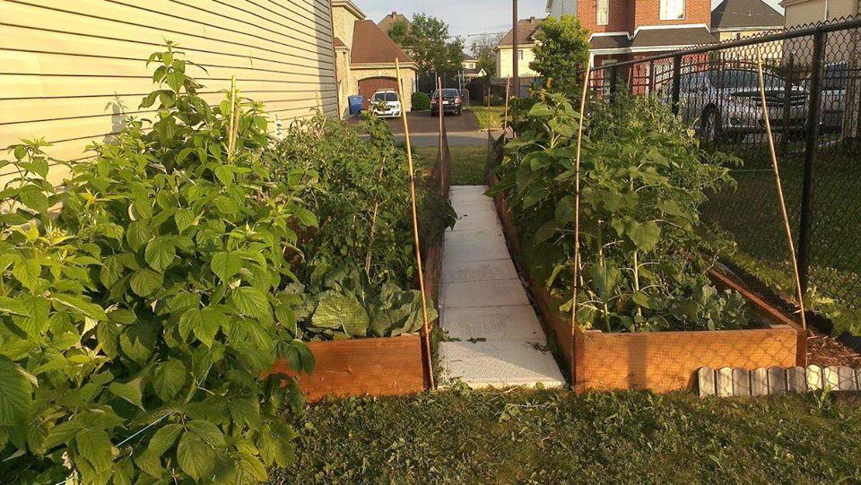 Cô gái truyền cảm hứng yêu thích làm vườn nhờ trồng cây gì cũng xanh mướt tốt tươi - Ảnh 2.