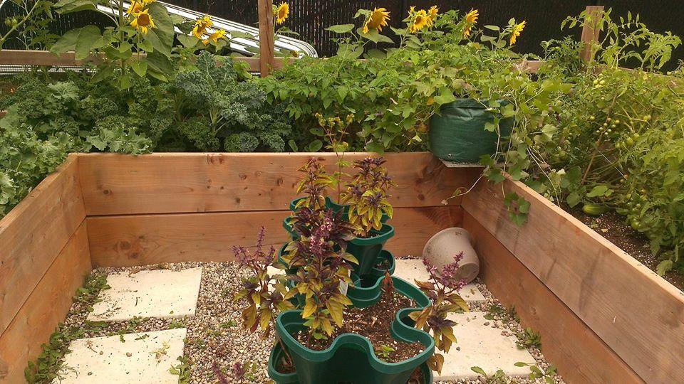 Cô gái truyền cảm hứng yêu thích làm vườn nhờ trồng cây gì cũng xanh mướt tốt tươi - Ảnh 10.