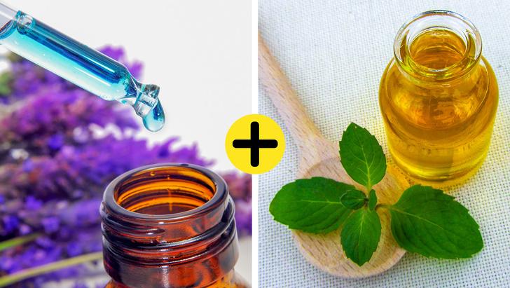 9 cách loại bỏ lũ côn trùng khó chịu bằng cách tận dụng các sản phẩm tự nhiên có trong nhà - Ảnh 10.