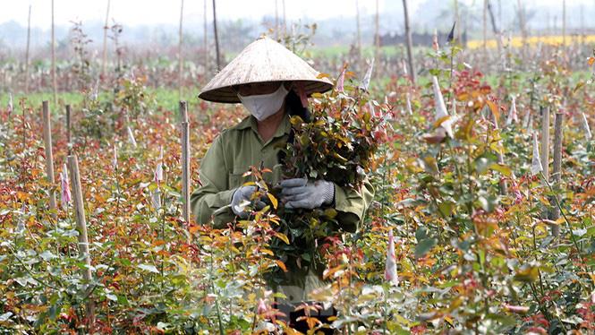 Cuộc sống trong thôn Hạ Lôi sau hơn mười ngày cấm cung vì COVID-19 - Ảnh 8.