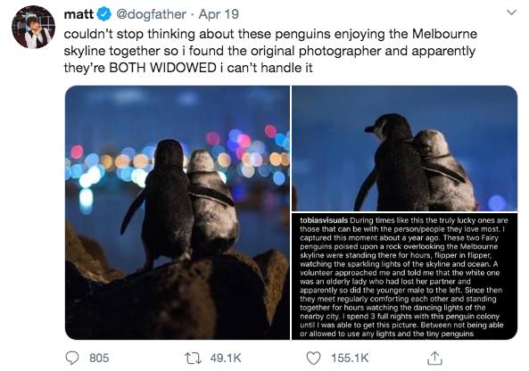"""Bức ảnh 2 con chim cánh cụt tựa vào nhau ngắm nhìn cảnh đêm tuyệt đẹp nhưng lại chứa đựng câu chuyện """"khiếm khuyết tình cảm"""" của chúng - Ảnh 3."""