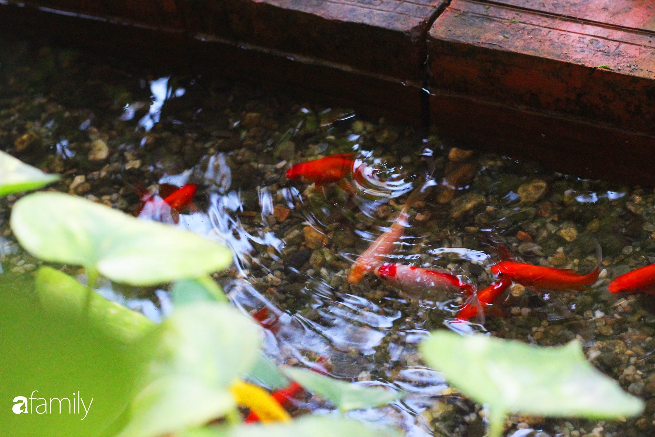 Ở nhà nghỉ dịch, chàng trai xứ Huế thảnh thơi bên ban công tự thiết kế với tiểu cảnh có hoa có cá phong cách nhiệt đới - Ảnh 14.