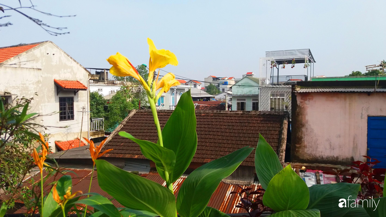Ở nhà nghỉ dịch, chàng trai xứ Huế thảnh thơi bên ban công tự thiết kế với tiểu cảnh có hoa có cá phong cách nhiệt đới - Ảnh 9.
