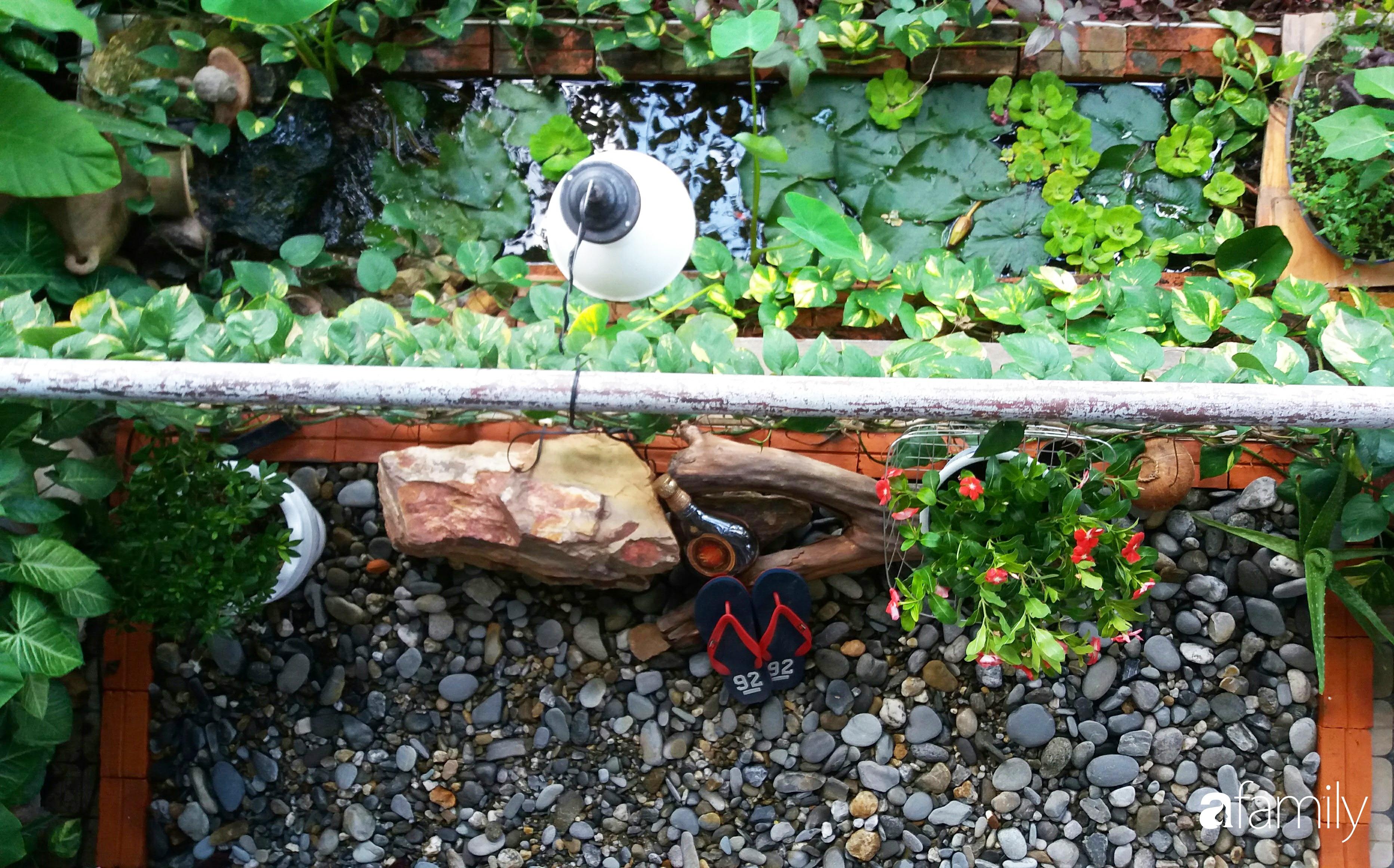 Ở nhà nghỉ dịch, chàng trai xứ Huế thảnh thơi bên ban công tự thiết kế với tiểu cảnh có hoa có cá phong cách nhiệt đới - Ảnh 3.