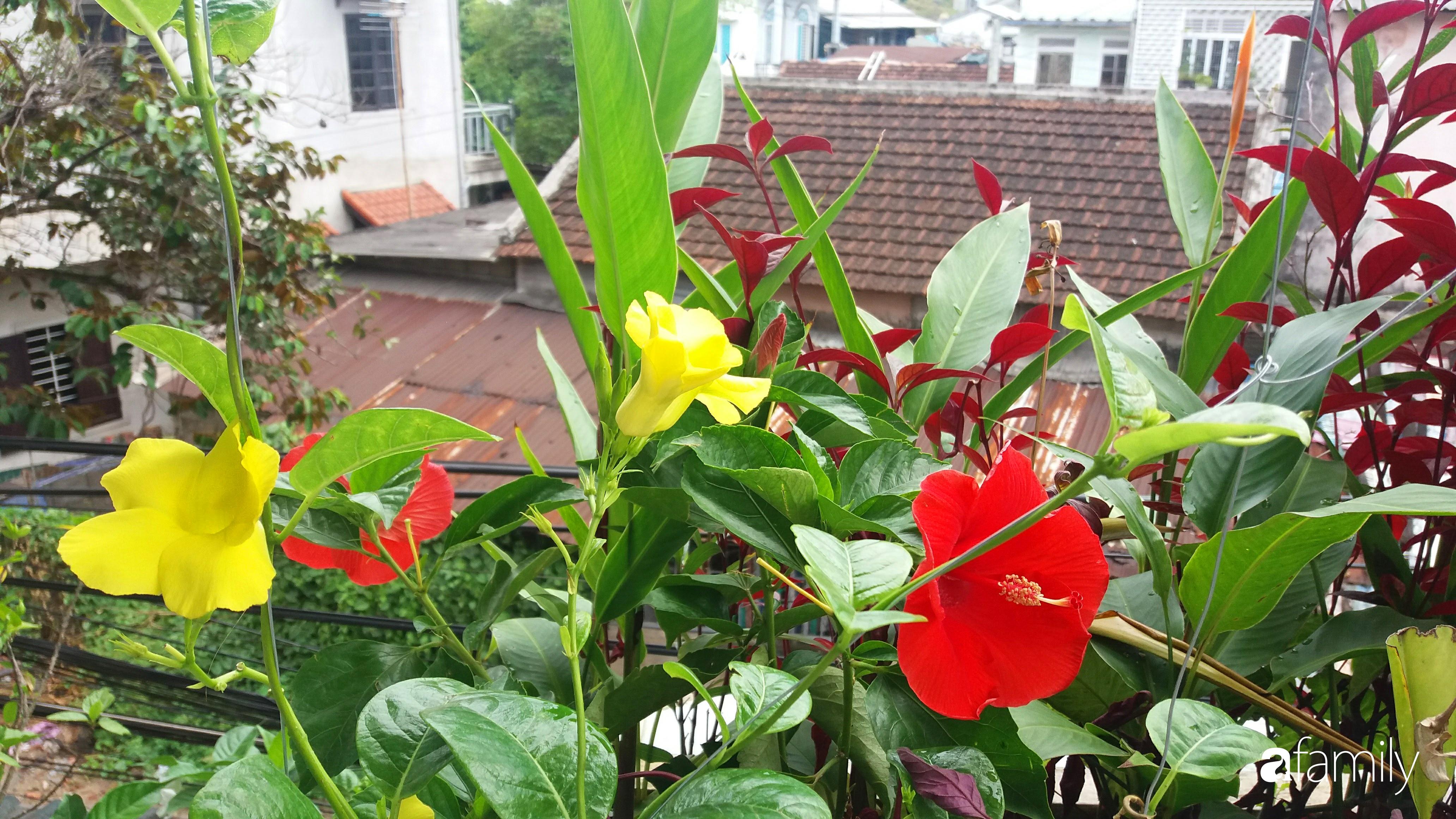 Ở nhà nghỉ dịch, chàng trai xứ Huế thảnh thơi bên ban công tự thiết kế với tiểu cảnh có hoa có cá phong cách nhiệt đới - Ảnh 8.