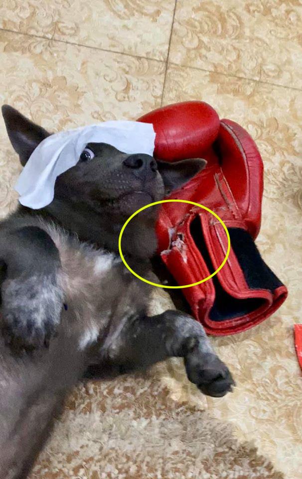 """Idol Nguyễn Văn Dúi đeo khẩu trang phòng dịch, nhưng nhìn kĩ thì có cái gì đó sai sai, con dân mạnh dạn đoán: """"Tối lại bị ngủ ngoài sân rồi boss ơi"""" - Ảnh 4."""