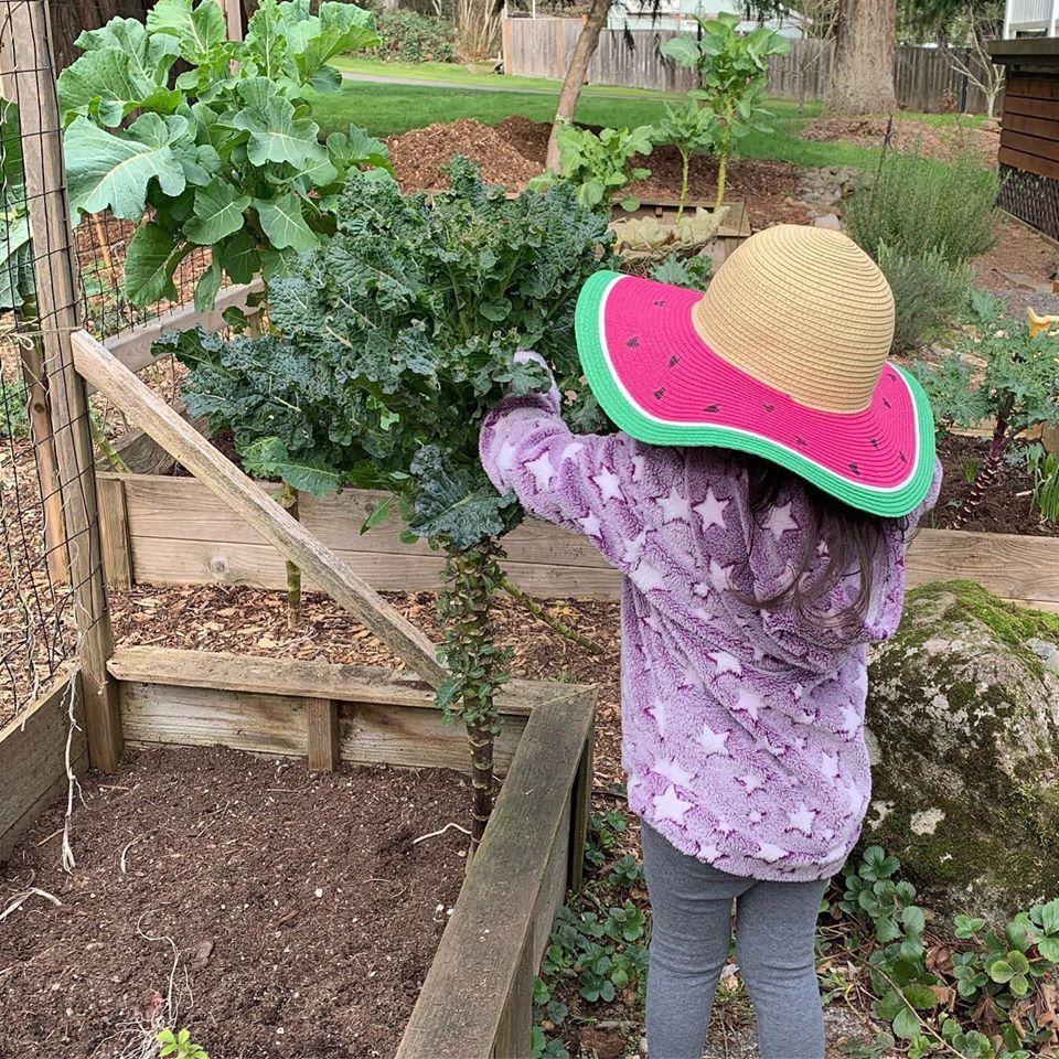 Bà mẹ 4 con dành cả thanh xuân để tạo lập khu vườn trồng cây ăn trái cùng đủ loại rau xanh - Ảnh 4.