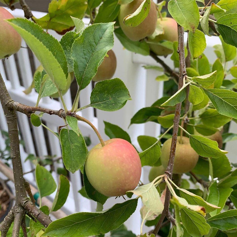 Bà mẹ 4 con dành cả thanh xuân để tạo lập khu vườn trồng cây ăn trái cùng đủ loại rau xanh - Ảnh 10.