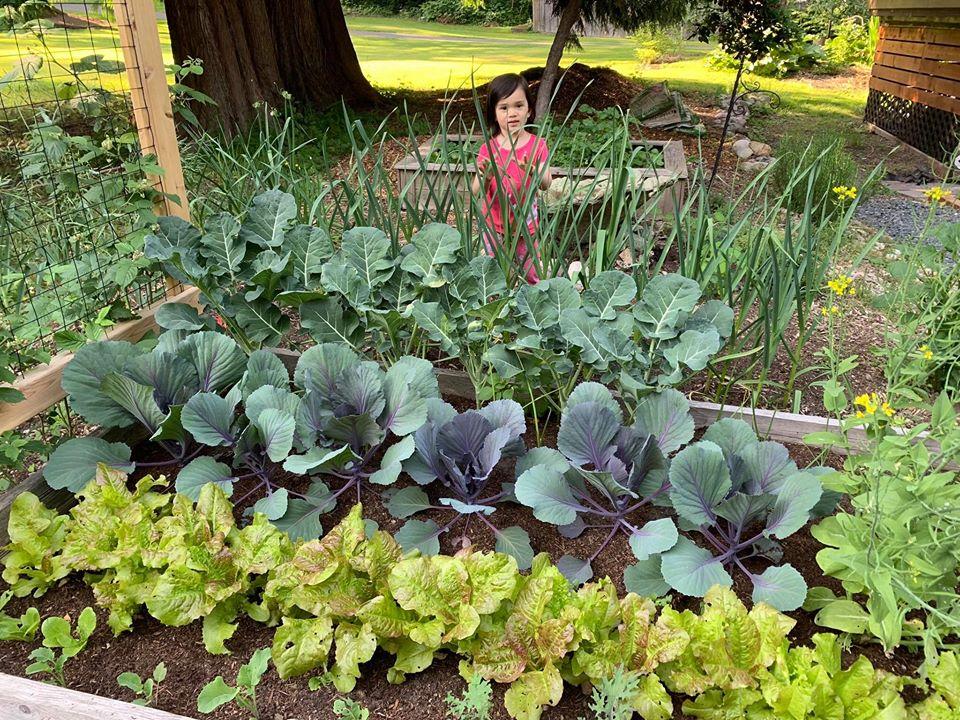 Bà mẹ 4 con dành cả thanh xuân để tạo lập khu vườn trồng cây ăn trái cùng đủ loại rau xanh - Ảnh 6.