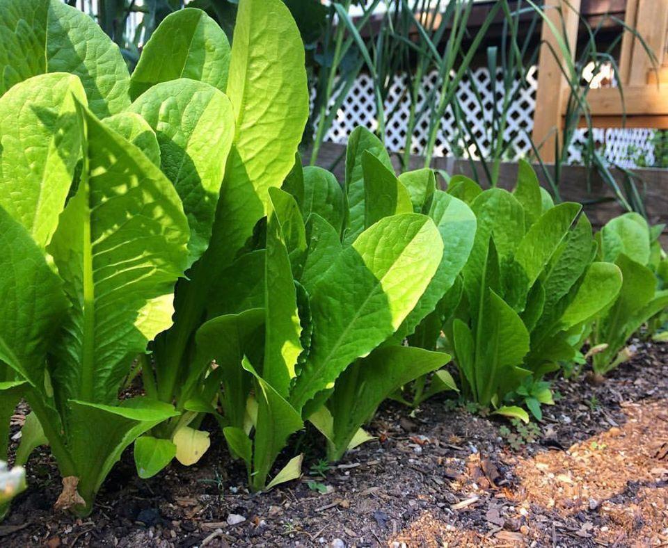 Bà mẹ 4 con dành cả thanh xuân để tạo lập khu vườn trồng cây ăn trái cùng đủ loại rau xanh - Ảnh 20.