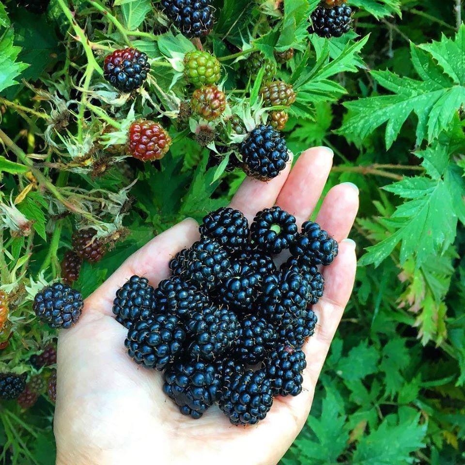 Bà mẹ 4 con dành cả thanh xuân để tạo lập khu vườn trồng cây ăn trái cùng đủ loại rau xanh - Ảnh 22.