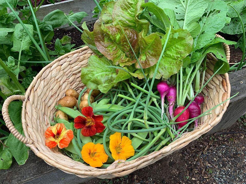 Bà mẹ 4 con dành cả thanh xuân để tạo lập khu vườn trồng cây ăn trái cùng đủ loại rau xanh - Ảnh 19.