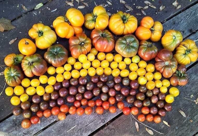 Bà mẹ 4 con dành cả thanh xuân để tạo lập khu vườn trồng cây ăn trái cùng đủ loại rau xanh - Ảnh 14.